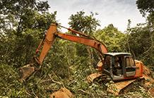 Brazilian Atlantic Forest deforestation up nearly 60%