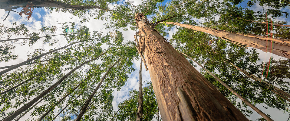 Eucalyptus pulplog prices in Brazil have reached their lowest level in three years